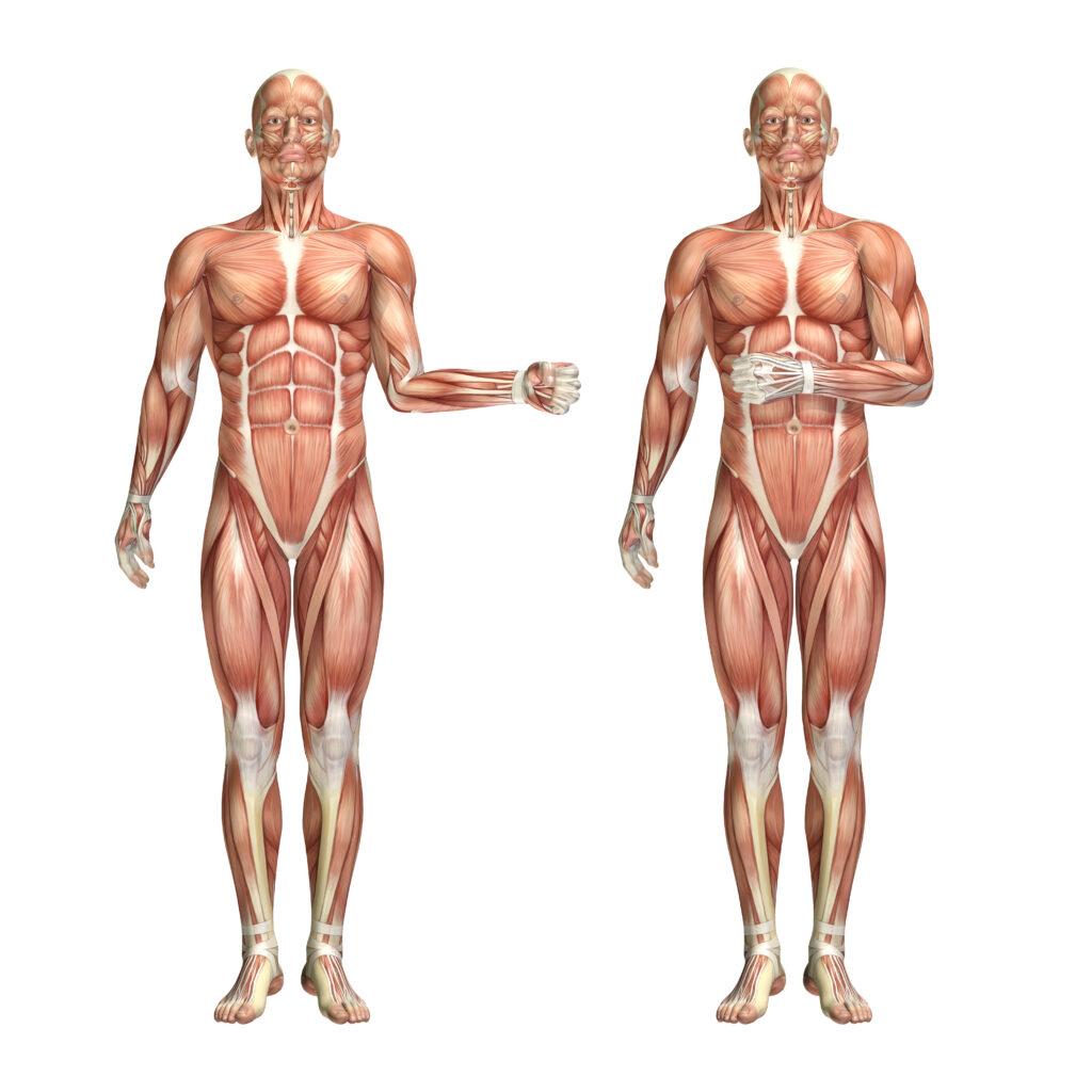 Rotacja zewnętrzna i wewnętrzna ramienia